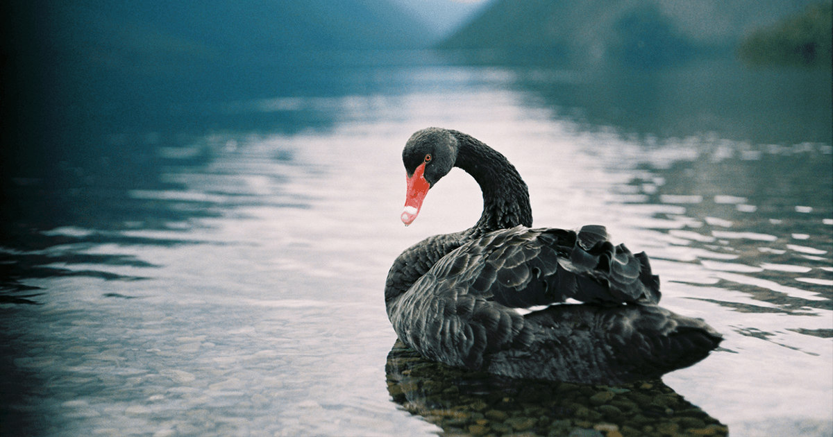 the Black Swan pdf